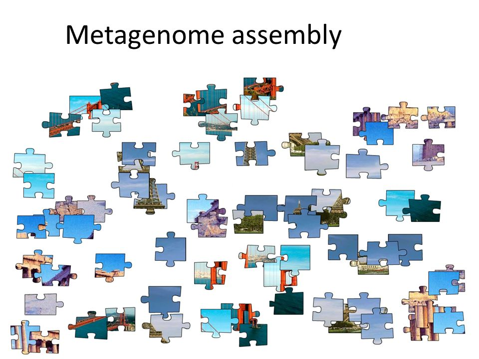 Metagenome assembly