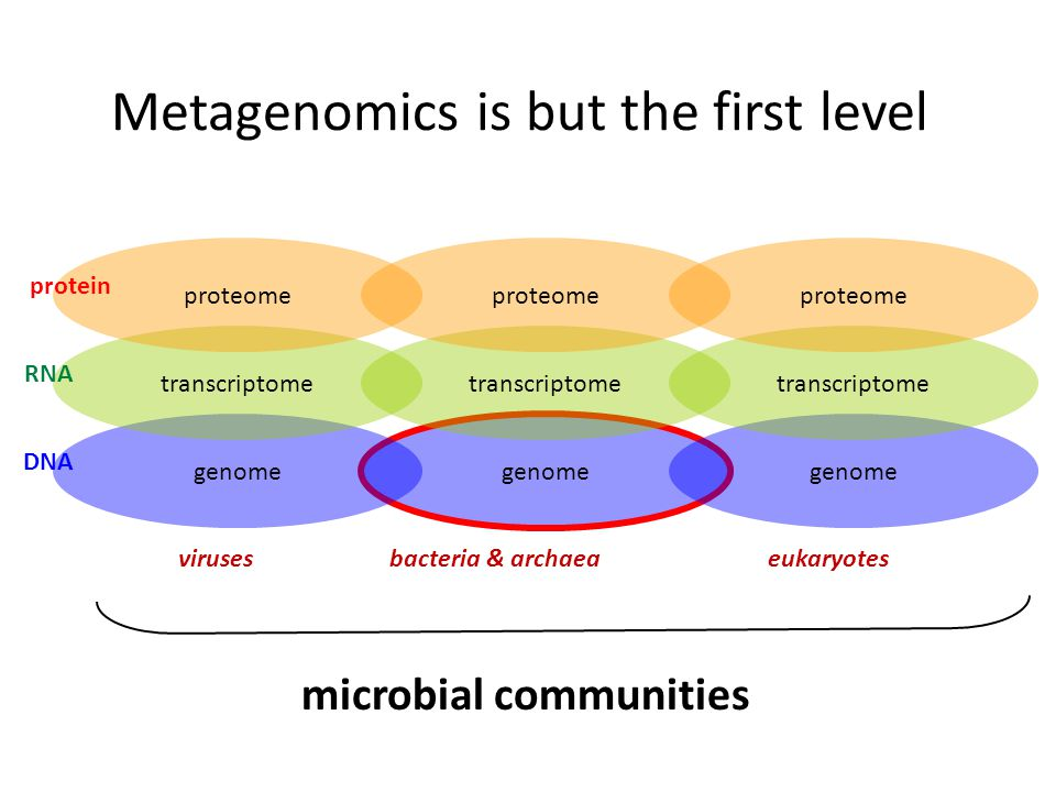 genome transcriptome proteome bacteria & archaeaviruses genome transcriptome proteome genome transcriptome proteome eukaryotes microbial communities DNA RNA protein Metagenomics is but the first level