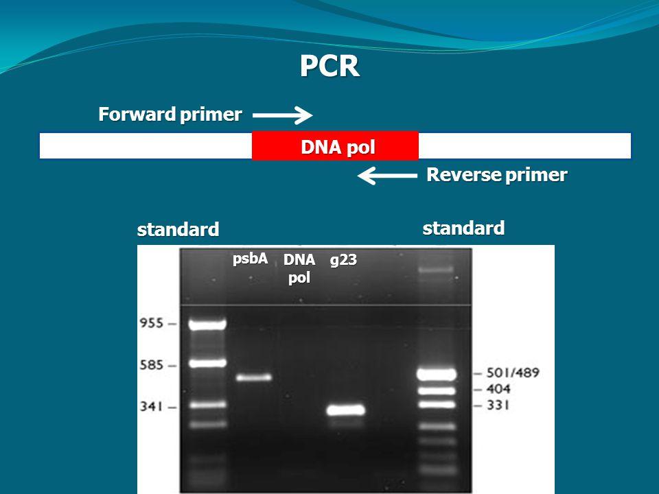 PCR Forward primer Reverse primer standardstandardpsbA DNApolg23