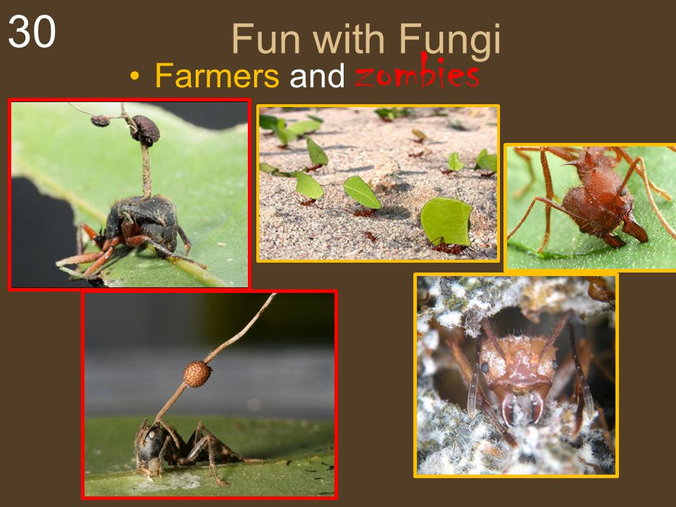 30 Fun with Fungi Farmers and zombies
