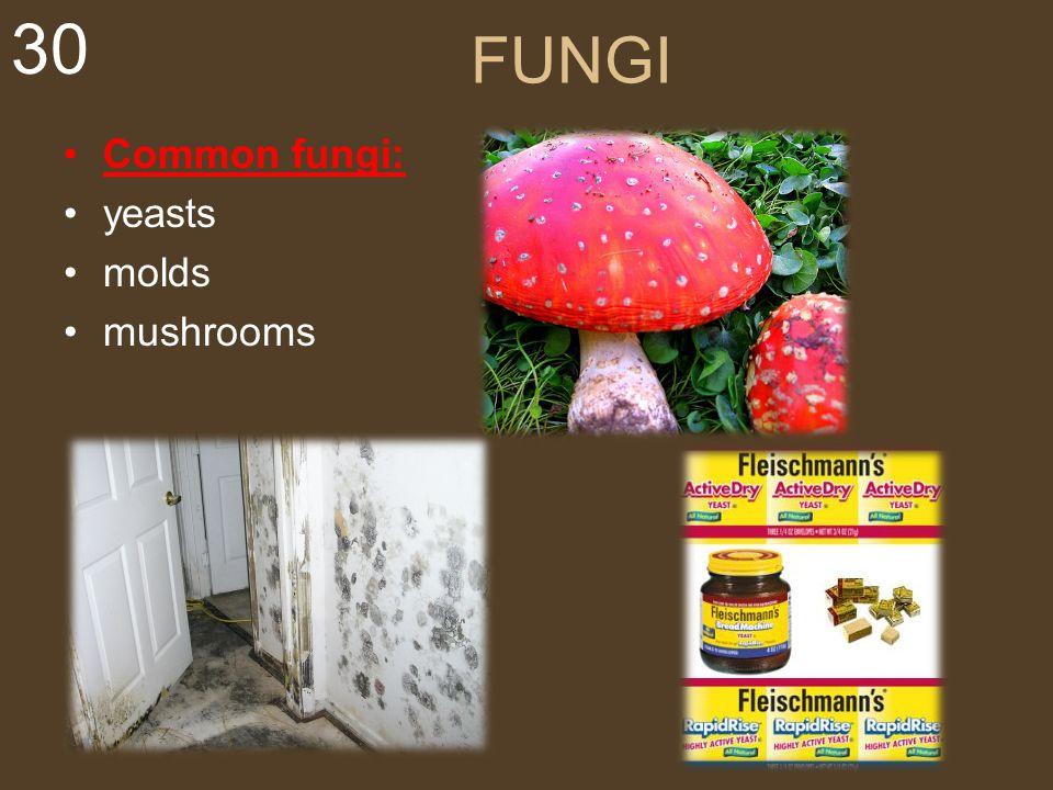 30 FUNGI Common fungi: yeasts molds mushrooms
