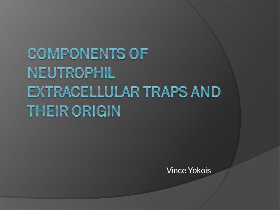 Vince Yokois