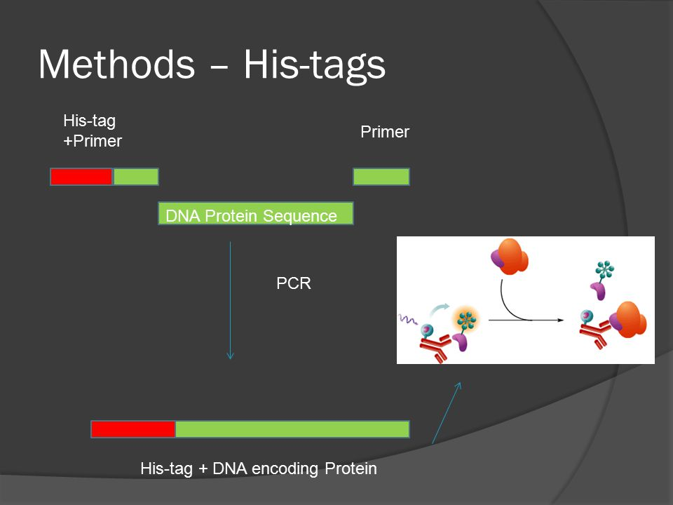 Methods – His-tags PCR His-tag +Primer Primer DNA Protein Sequence His-tag + DNA encoding Protein