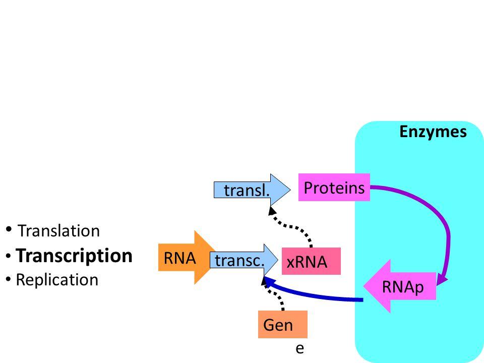 Building Blocks RNA RNAp transl. Proteins xRNA transc.