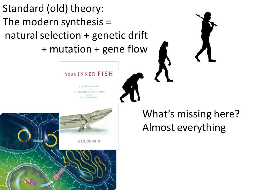 Standard (old) theory: The modern synthesis = natural selection + genetic drift + mutation + gene flow What's missing here.