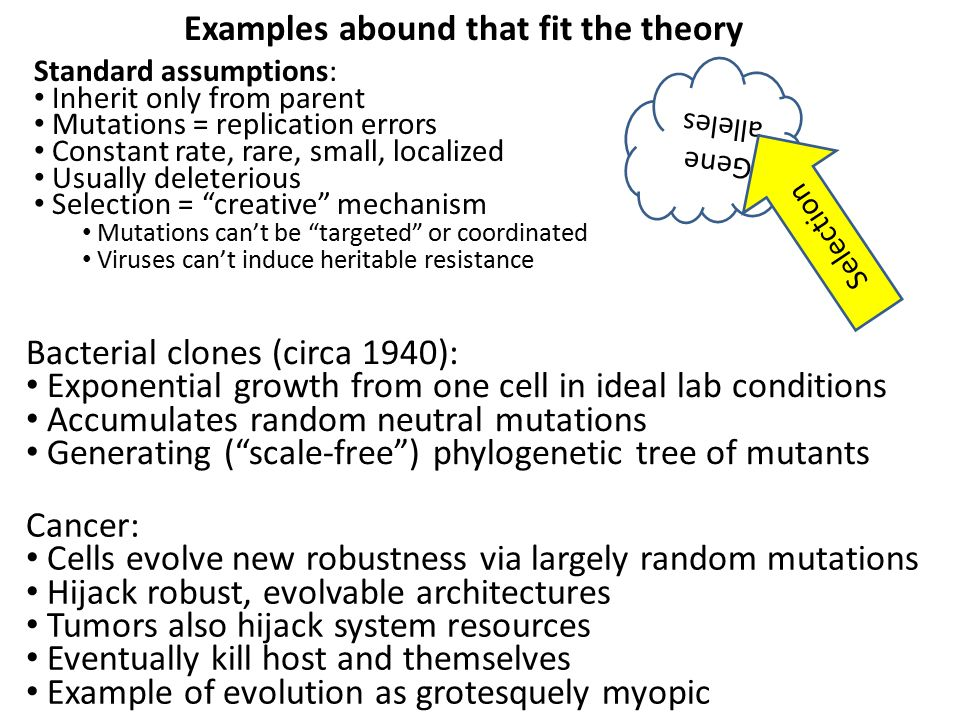 Examples abound that fit the theory Standard assumptions: Inherit only from parent Mutations = replication errors Constant rate, rare, small, localized Usually deleterious Selection = creative mechanism Mutations can't be targeted or coordinated Viruses can't induce heritable resistance Gene alleles Selection Cancer: Cells evolve new robustness via largely random mutations Hijack robust, evolvable architectures Tumors also hijack system resources Eventually kill host and themselves Example of evolution as grotesquely myopic Bacterial clones (circa 1940): Exponential growth from one cell in ideal lab conditions Accumulates random neutral mutations Generating ( scale-free ) phylogenetic tree of mutants