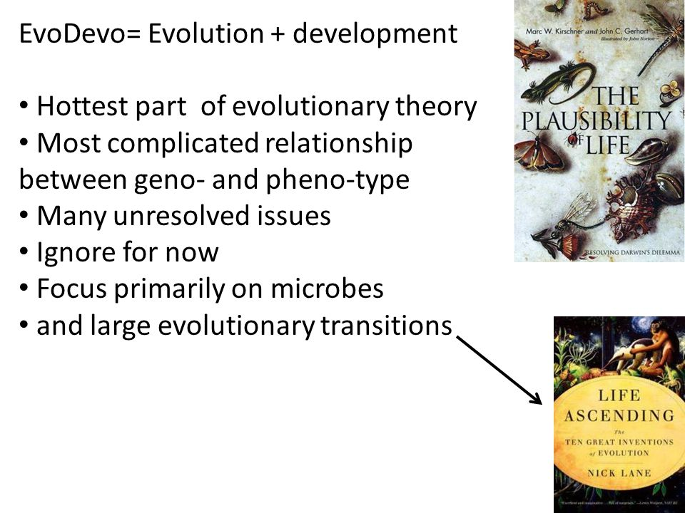 EvoDevo= Evolution + development Hottest part of evolutionary theory Most complicated relationship between geno- and pheno-type Many unresolved issues Ignore for now Focus primarily on microbes and large evolutionary transitions