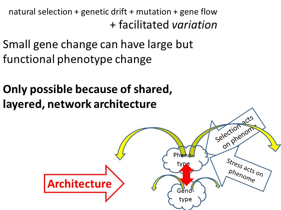 Selection acts on phenome natural selection + genetic drift + mutation + gene flow + facilitated variation Small gene change can have large but functional phenotype change Only possible because of shared, layered, network architecture Geno- type Stress acts on phenome Pheno- type Architecture