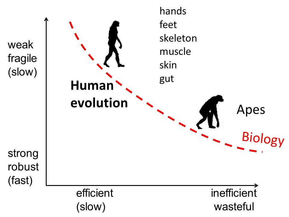 inefficient wasteful weak fragile (slow) efficient (slow) strong robust (fast) Biology Human evolution Apes hands feet skeleton muscle skin gut
