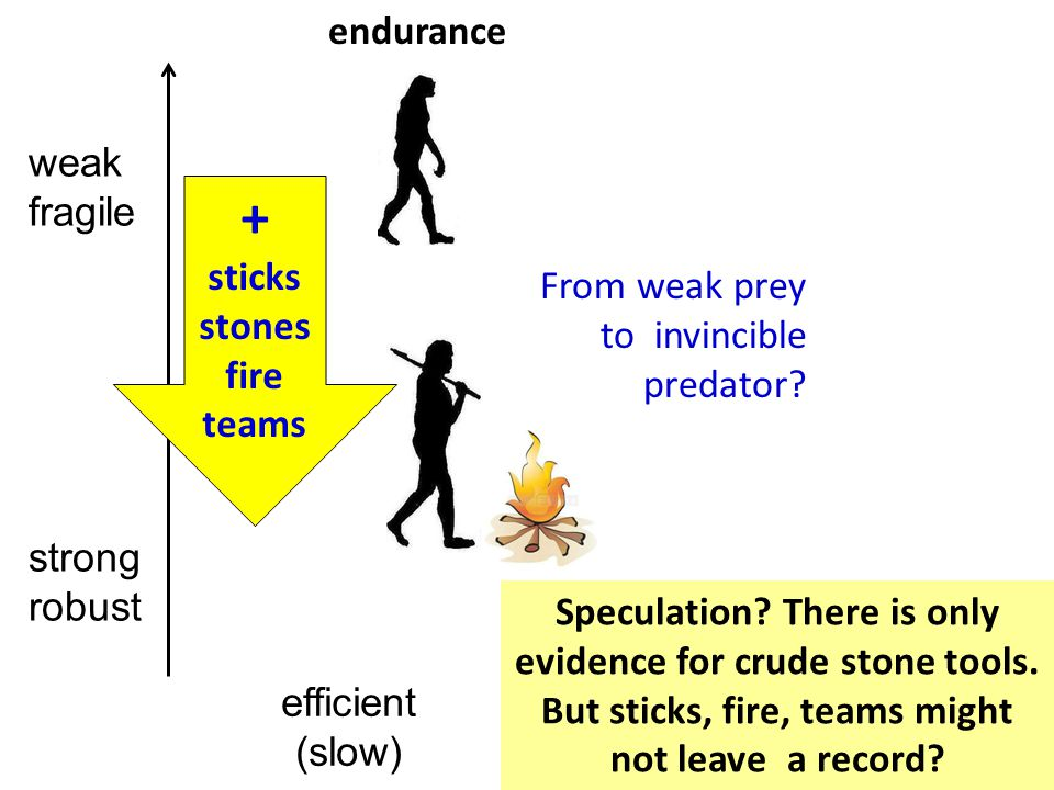 weak fragile efficient (slow) strong robust + sticks stones fire teams From weak prey to invincible predator.