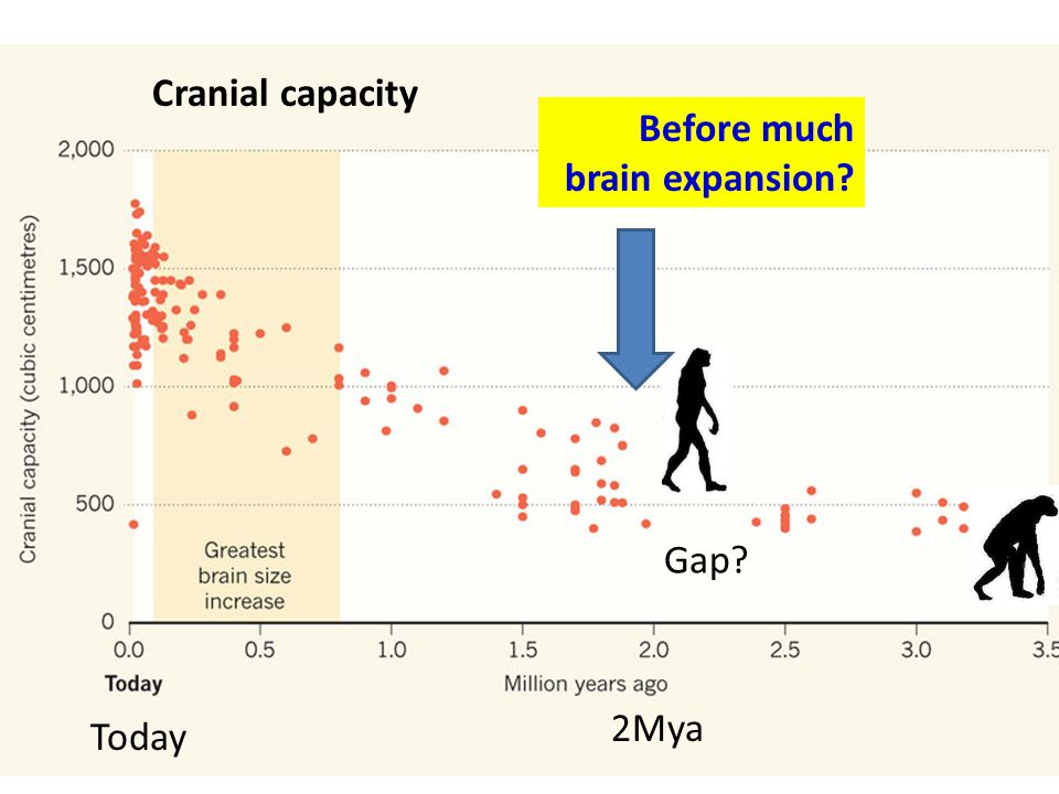 Today 2Mya Cranial capacity Gap? Before much brain expansion?