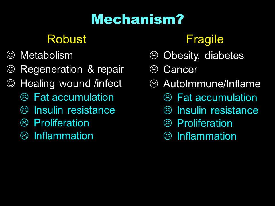 RobustFragile Mechanism.