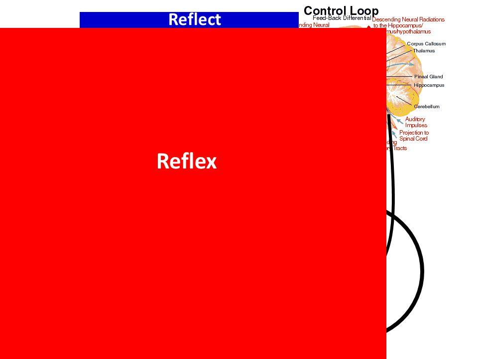sense move Spine Reflex Reflect
