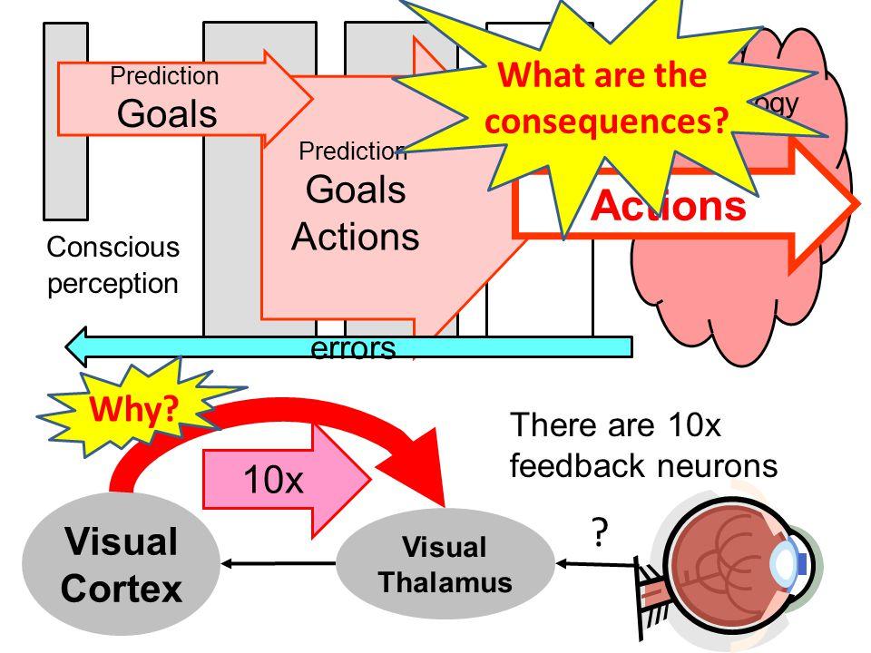 Visual Cortex Visual Thalamus .