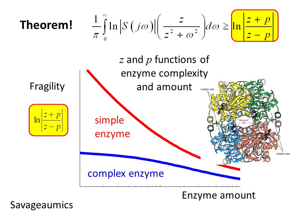simple enzyme Fragility Enzyme amount complex enzyme Theorem.