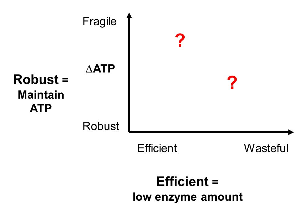 Fragile Robust WastefulEfficient Robust = Maintain ATP Efficient = low enzyme amount  ATP ? ?