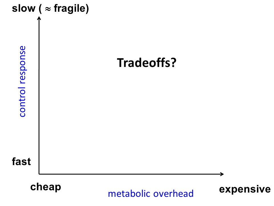 cheap fast slow (  fragile) expensive Tradeoffs? metabolic overhead control response