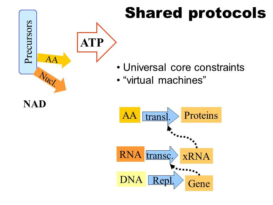 AA RNA transl. Proteins xRNA transc. Precursors Nucl.