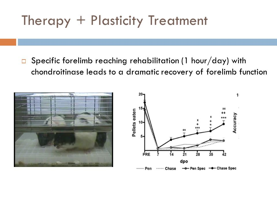 Therapy + Plasticity Treatment  Specific forelimb reaching rehabilitation (1 hour/day) with chondroitinase leads to a dramatic recovery of forelimb function