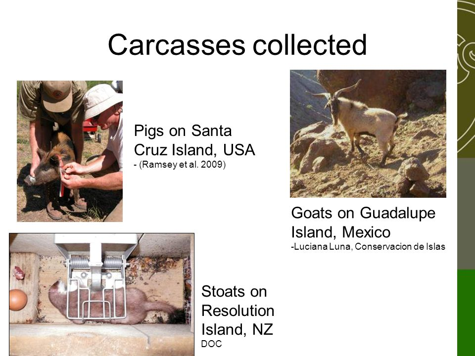 Carcasses collected Pigs on Santa Cruz Island, USA - (Ramsey et al. 2009) Stoats on Resolution Island, NZ DOC Goats on Guadalupe Island, Mexico -Lucia