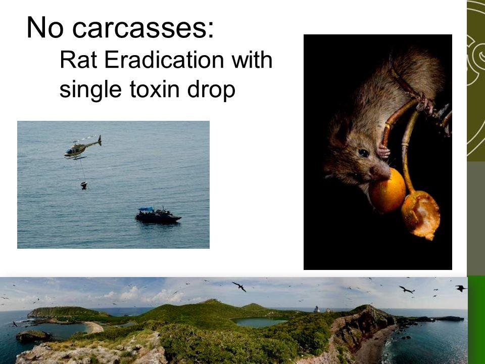 No carcasses: Rat Eradication with single toxin drop