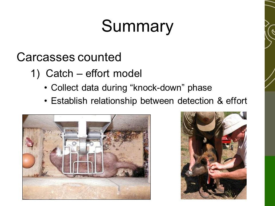 "Summary Carcasses counted 1)Catch – effort model Collect data during ""knock-down"" phase Establish relationship between detection & effort"