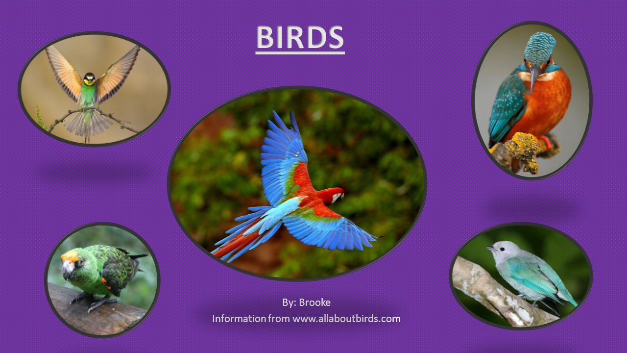 By: Brooke Information from www.allaboutbirds.com