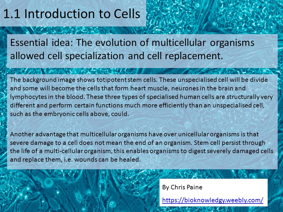 By Chris Paine https://bioknowledgy.weebly.com/ 1.1 Introduction to Cells Essential idea: The evolution of multicellular organisms allowed cell specia