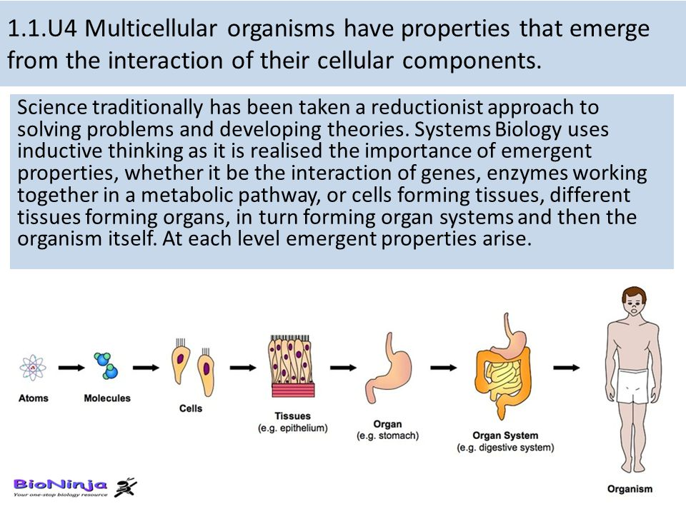 1.1.U4 Multicellular organisms have properties that emerge from the interaction of their cellular components. Science traditionally has been taken a r