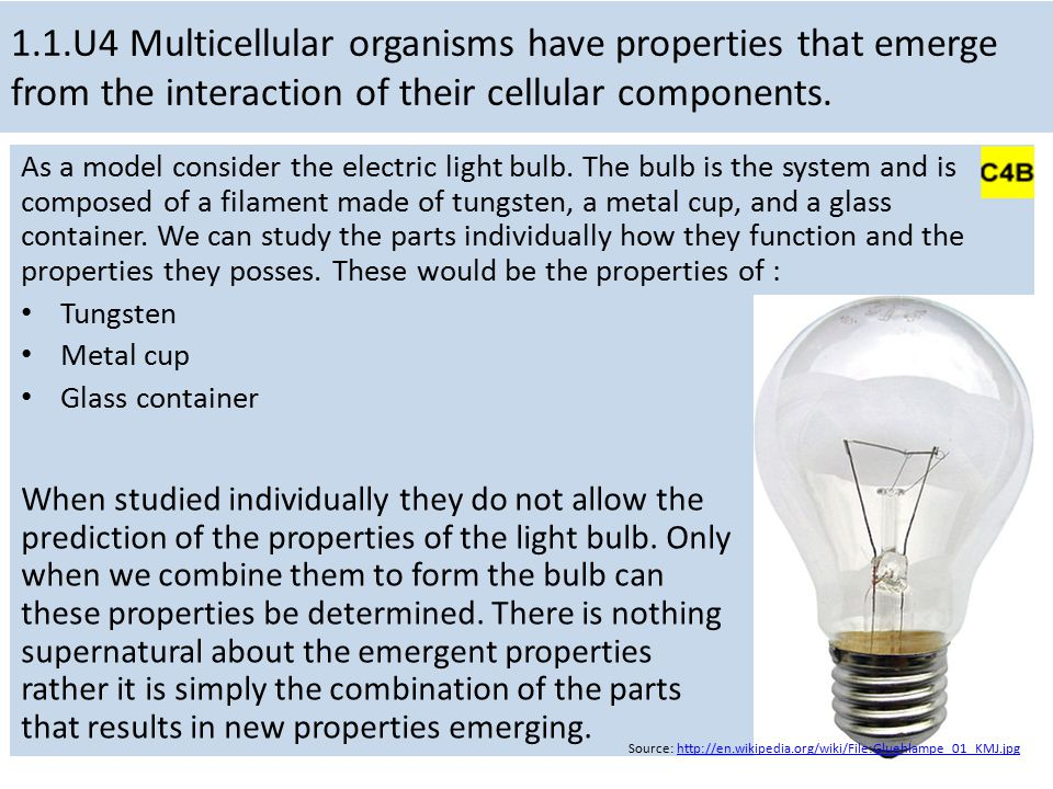 1.1.U4 Multicellular organisms have properties that emerge from the interaction of their cellular components. As a model consider the electric light b