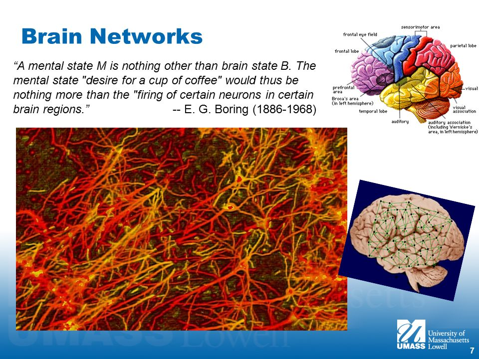 7 Brain Networks A mental state M is nothing other than brain state B.