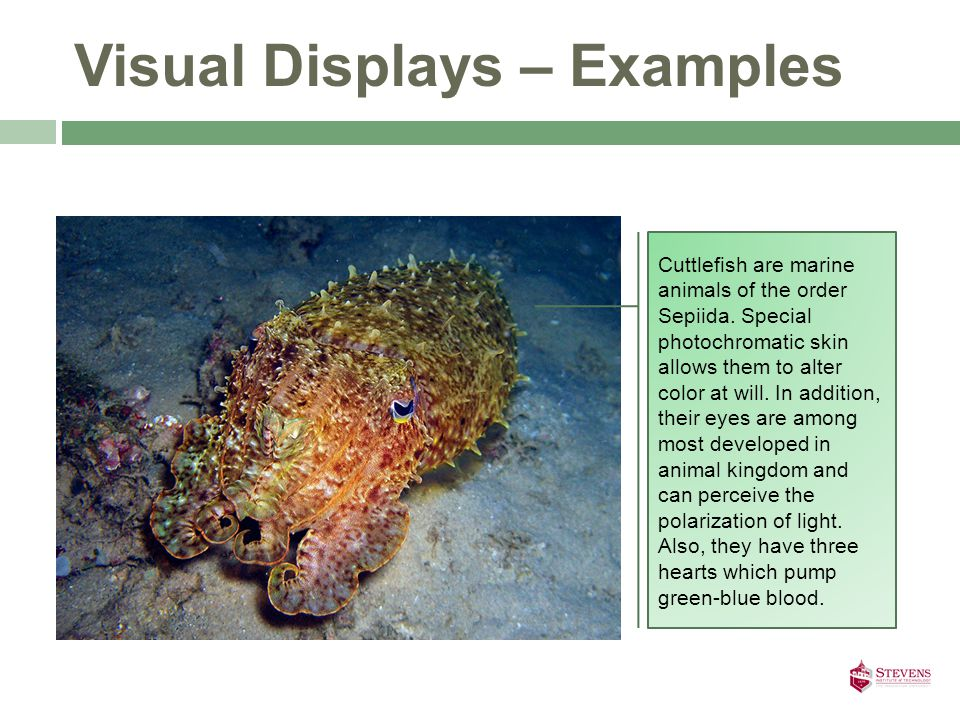 Visual Displays – Examples Cuttlefish are marine animals of the order Sepiida.