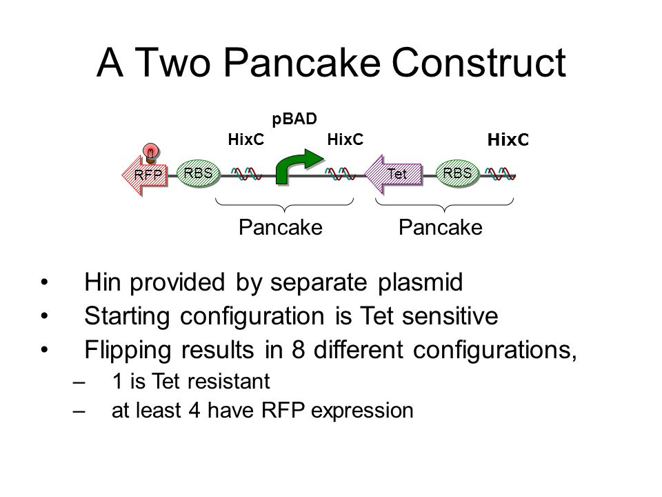 A Two Pancake Construct RFP RBS Tet RBS Pancake HixC pBAD HixC Hin provided by separate plasmid Starting configuration is Tet sensitive Flipping results in 8 different configurations, –1 is Tet resistant –at least 4 have RFP expression