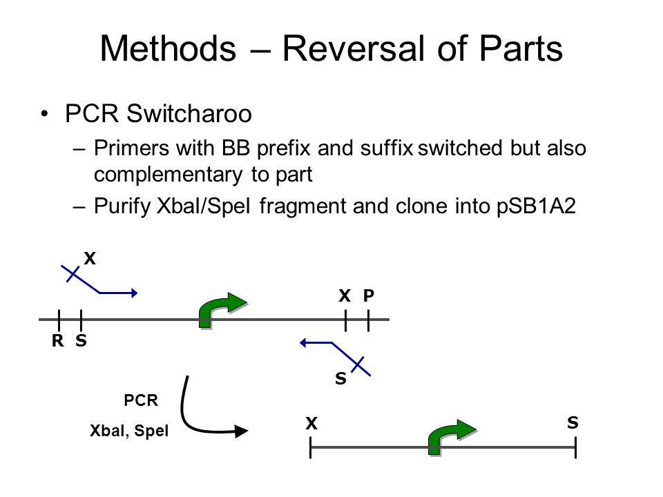 Methods – Reversal of Parts PCR Switcharoo –Primers with BB prefix and suffix switched but also complementary to part –Purify XbaI/SpeI fragment and clone into pSB1A2 R S X P S X X S PCR XbaI, SpeI