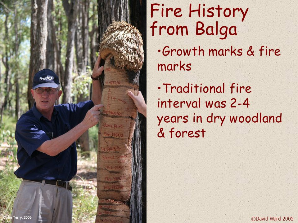 … it is not unreasonable to assume that the forest was completely burnt through every 2-4 years.