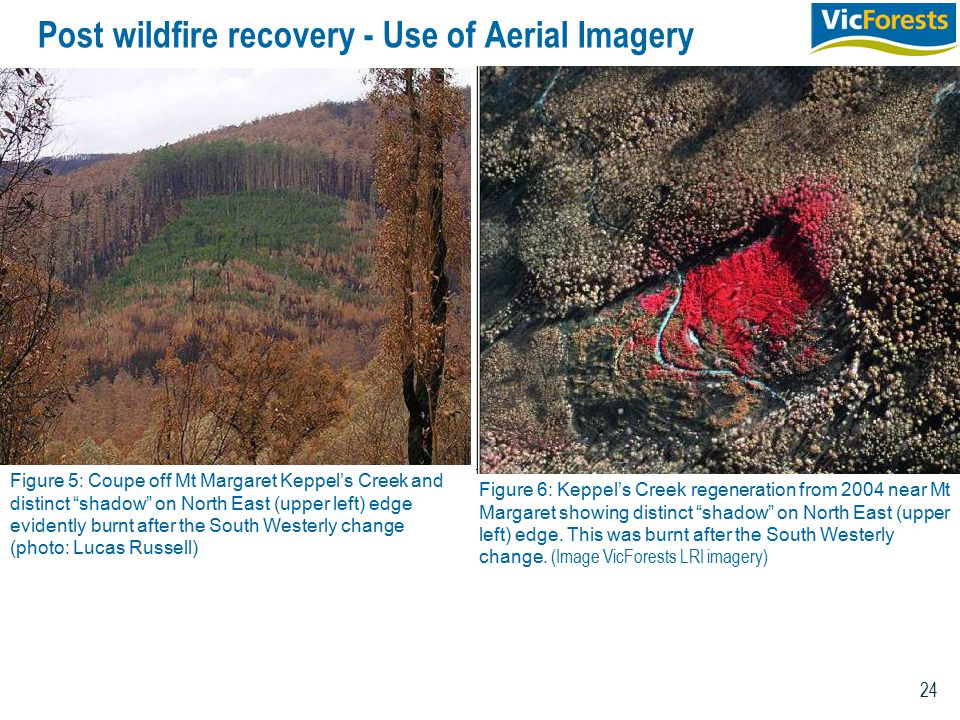 24 Post wildfire recovery - Use of Aerial Imagery Figure 5: Coupe off Mt Margaret Keppel's Creek and distinct shadow on North East (upper left) edge evidently burnt after the South Westerly change (photo: Lucas Russell) Figure 6: Keppel's Creek regeneration from 2004 near Mt Margaret showing distinct shadow on North East (upper left) edge.
