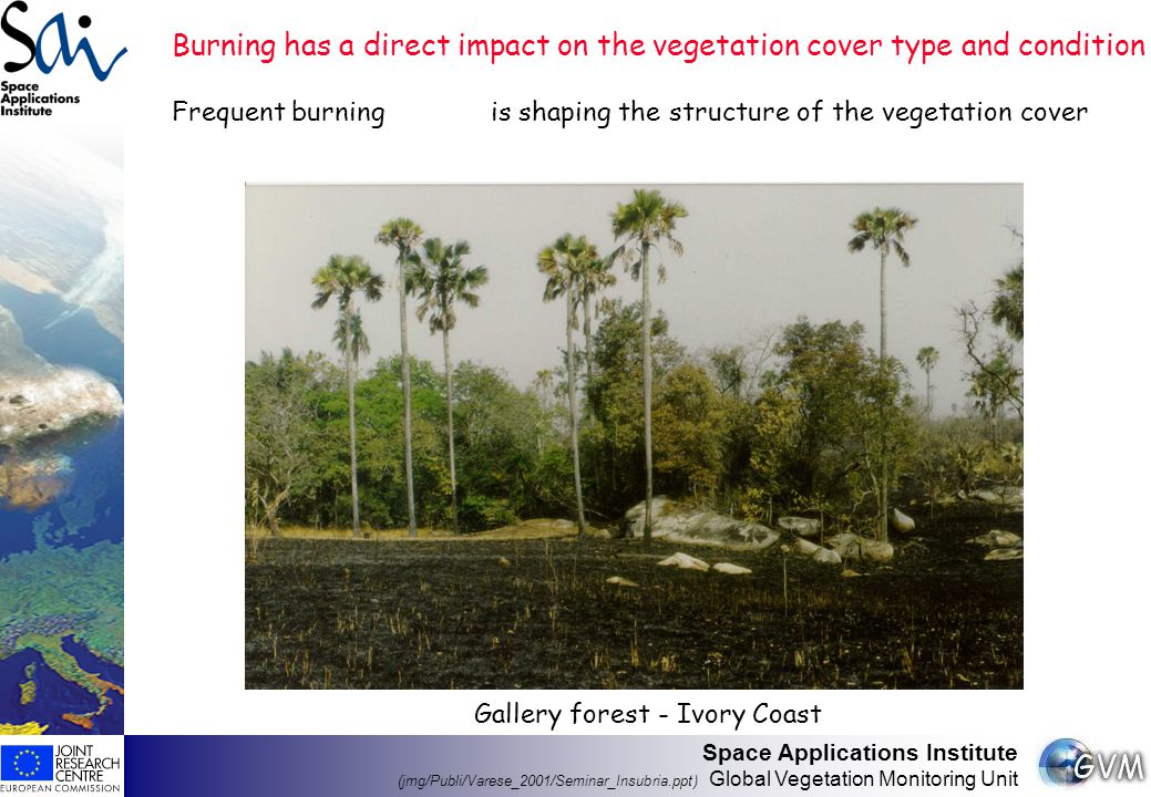Space Applications Institute (jmg/Publi/Varese_2001/Seminar_Insubria.ppt) Global Vegetation Monitoring Unit Burning has a direct impact on the vegetation cover type and condition Frequent burningis shaping the structure of the vegetation cover Gallery forest - Ivory Coast