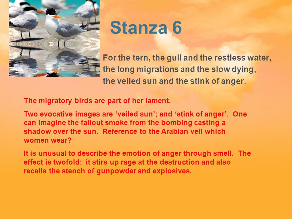 Stanza 6 For the tern, the gull and the restless water, the long migrations and the slow dying, the veiled sun and the stink of anger.