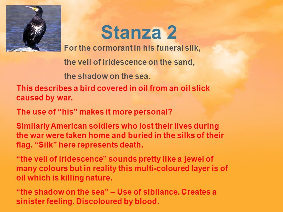 Stanza 2 05 For the cormorant in his funeral silk, the veil of iridescence on the sand, the shadow on the sea.