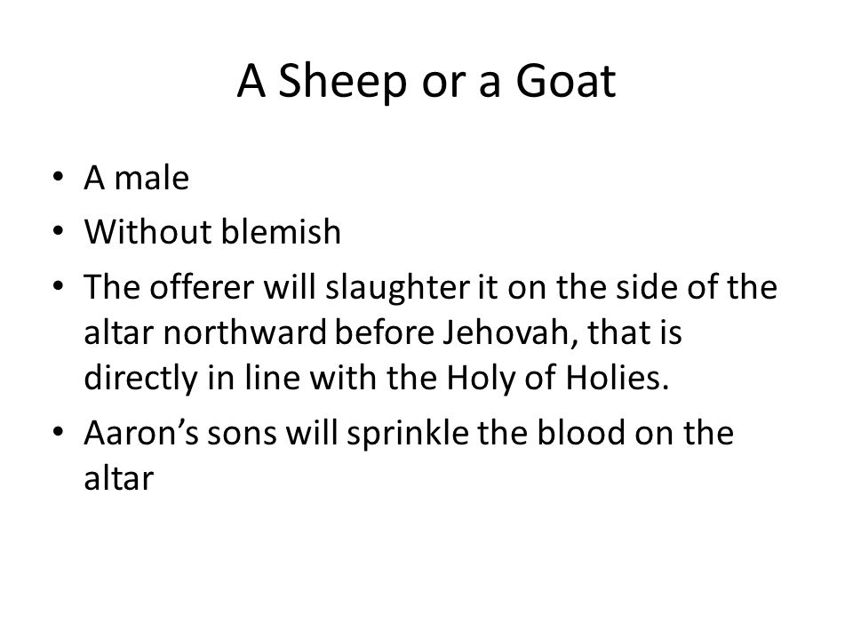 A Sheep or a Goat A male Without blemish The offerer will slaughter it on the side of the altar northward before Jehovah, that is directly in line wit