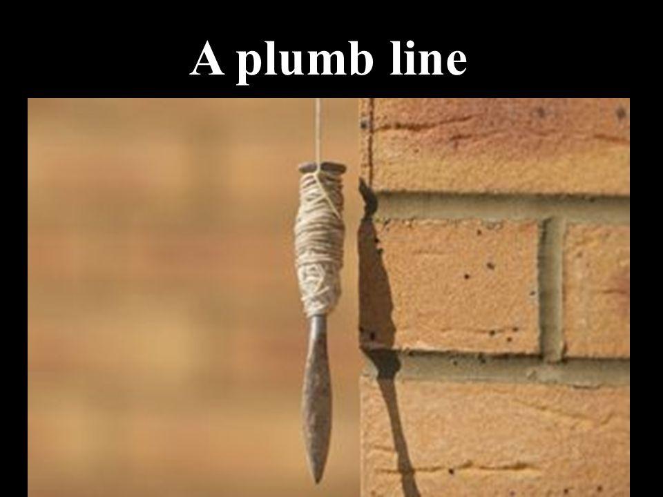 A plumb line