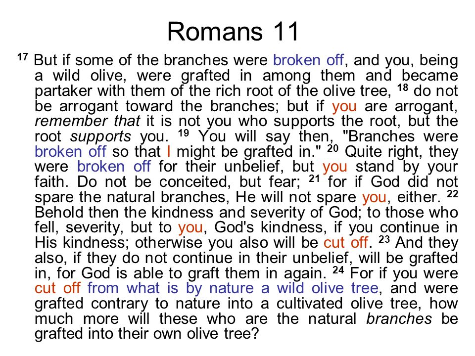 Romans 11 17 But if some of the branches were broken off, and you, being a wild olive, were grafted in among them and became partaker with them of the rich root of the olive tree, 18 do not be arrogant toward the branches; but if you are arrogant, remember that it is not you who supports the root, but the root supports you.