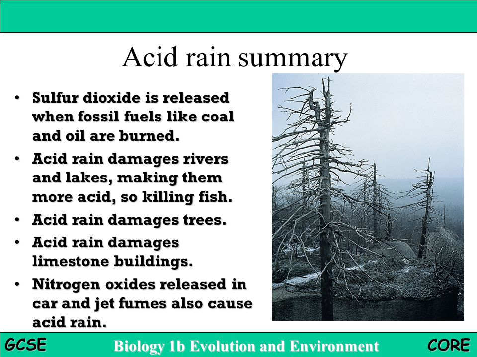 Biology 1b Evolution and Environment GCSE CORE Acid rain summary Sulfur dioxide is released when fossil fuels like coal and oil are burned.Sulfur dioxide is released when fossil fuels like coal and oil are burned.