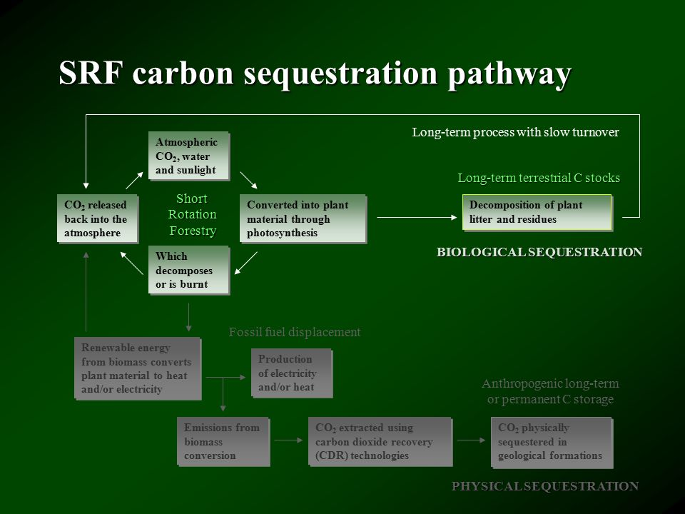 SRF carbon sequestration pathway Atmospheric CO 2, water and sunlight CO 2 released back into the atmosphere Converted into plant material through photosynthesis Which decomposes or is burnt Renewable energy from biomass converts plant material to heat and/or electricity Production of electricity and/or heat Emissions from biomass conversion CO 2 extracted using carbon dioxide recovery (CDR) technologies CO 2 physically sequestered in geological formations Fossil fuel displacement Anthropogenic long-term or permanent C storage Decomposition of plant litter and residues Long-term terrestrial C stocks Long-term process with slow turnover PHYSICAL SEQUESTRATION BIOLOGICAL SEQUESTRATION ShortRotationForestry