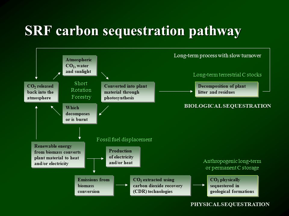 SRF carbon sequestration pathway Atmospheric CO 2, water and sunlight CO 2 released back into the atmosphere Converted into plant material through photosynthesis Which decomposes or is burnt Renewable energy from biomass converts plant material to heat and/or electricity Production of electricity and/or heat Emissions from biomass conversion CO 2 extracted using carbon dioxide recovery (CDR) technologies CO 2 physically sequestered in geological formations ShortRotationForestry Fossil fuel displacement Anthropogenic long-term or permanent C storage Decomposition of plant litter and residues Long-term terrestrial C stocks Long-term process with slow turnover PHYSICAL SEQUESTRATION BIOLOGICAL SEQUESTRATION
