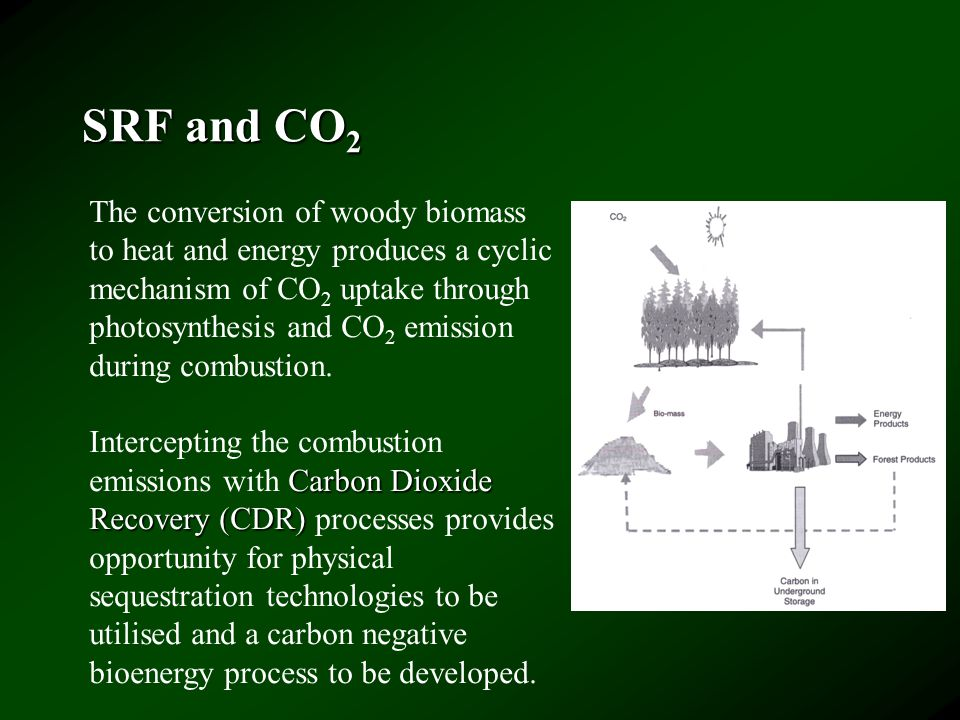 SRF and CO 2 The conversion of woody biomass to heat and energy produces a cyclic mechanism of CO 2 uptake through photosynthesis and CO 2 emission during combustion.