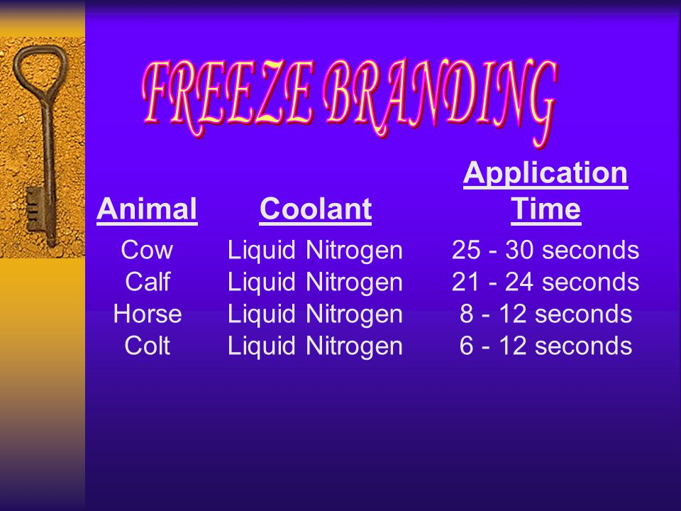 AnimalCoolant Application Time Cow Calf Horse ColtLiquid NitrogenLiquid Nitrogen 25 - 30 seconds 21 - 24 seconds 8 - 12 seconds 6 - 12 seconds