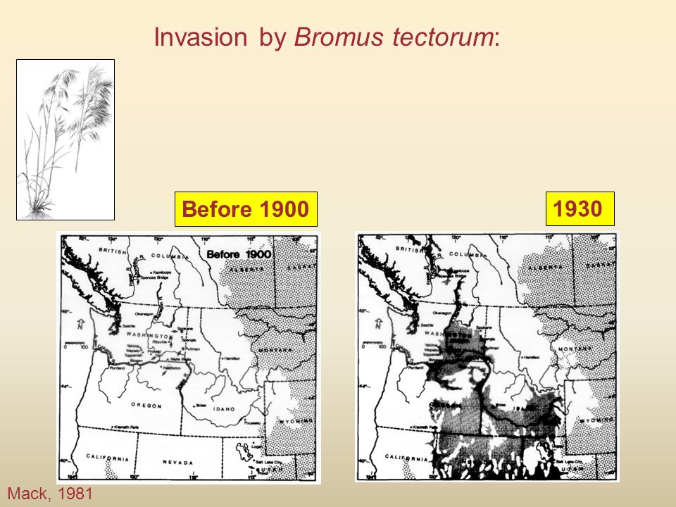 Before 1900 Mack, 1981 1930 Invasion by Bromus tectorum: