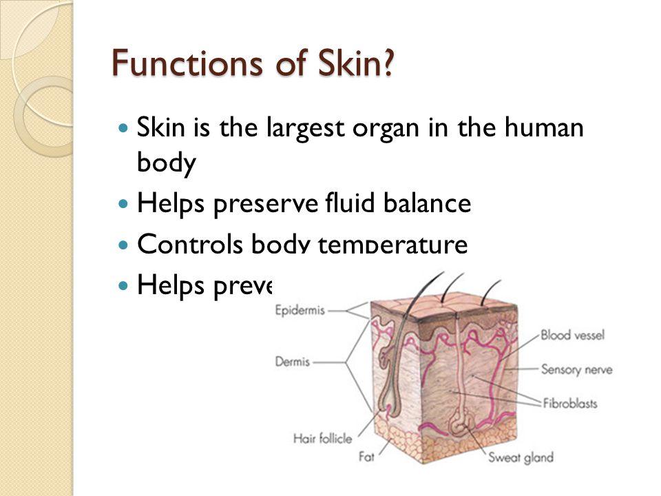 Functions of Skin.