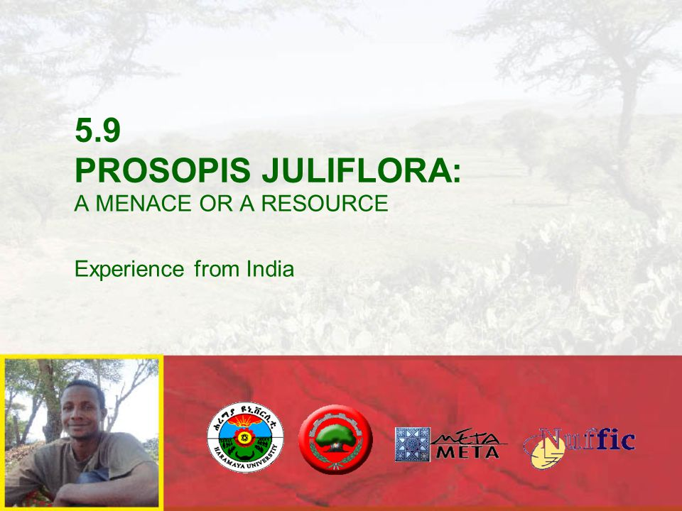 5.9 PROSOPIS JULIFLORA: A MENACE OR A RESOURCE Experience from India